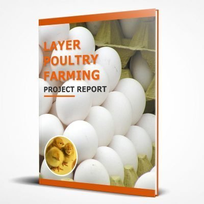 Layer poultry farming project report PDF