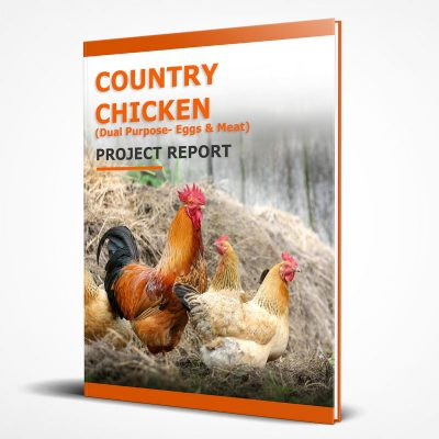 Country chicken farm project report