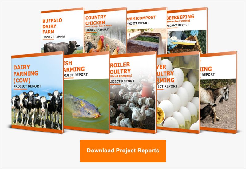 Download Project Reports