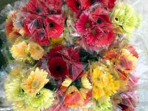 Gerbera Flowers after Packing